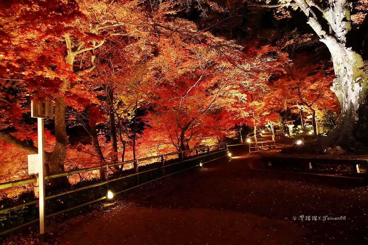 北野天滿宮 夜楓