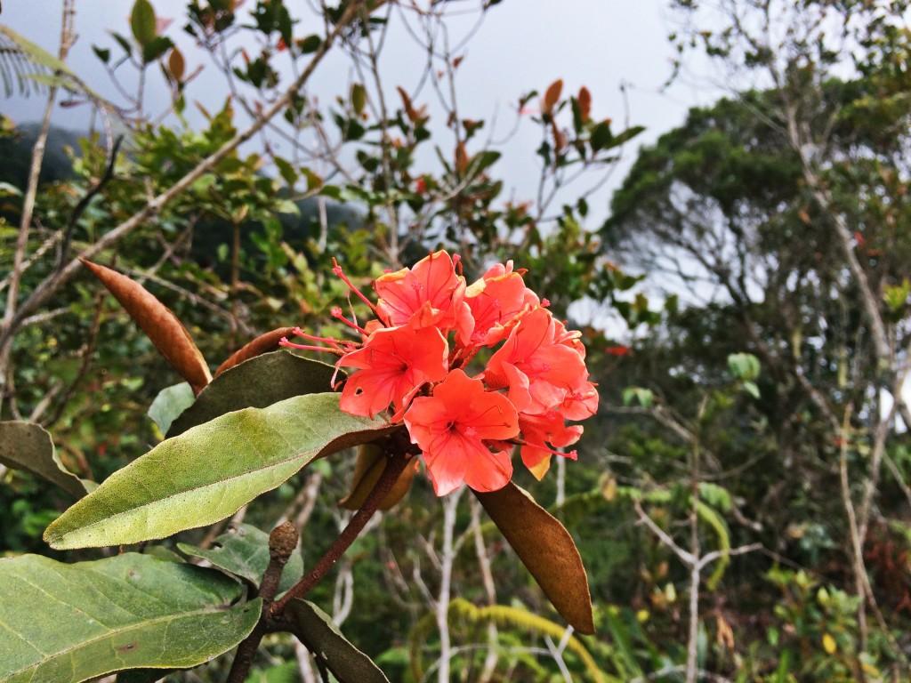 馬來西亞神山 03